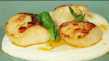 Seared Scallops with Chorizo Butter, Cauliflower Puree and Pea Shoots