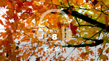 Day 8 – Gratitude – For Self
